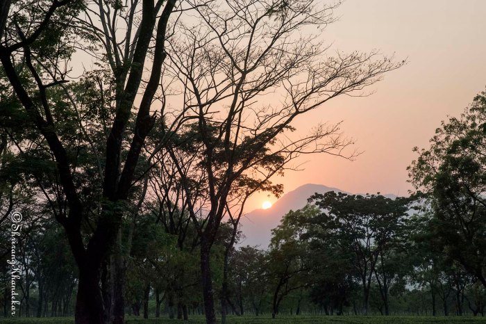 Sunset seen thru tea plantation